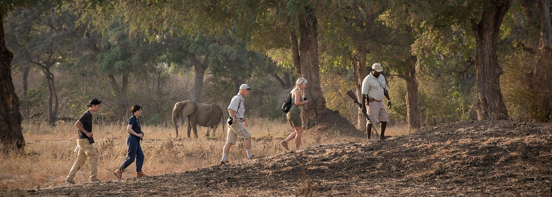 Elephant on walking safari, Mana Pools National Park, Wilderness Safaris, Zimbabwe