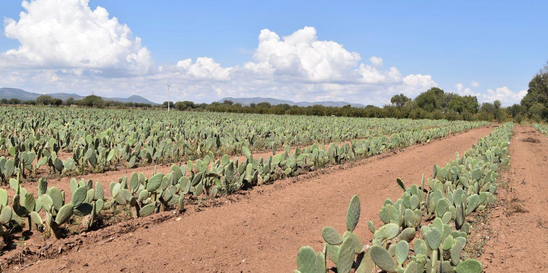 Vegan Leather from Cactus Desserto