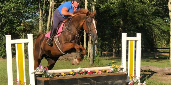 consignment sales  horses for sale     foxhunter   fox hunting  draft crosses for sale
