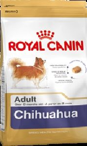 CHIHUAHUA ADULT