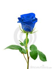 Blue rose (in sleeve)