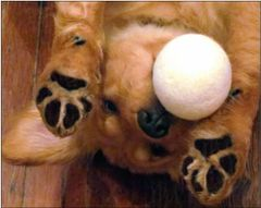 Dog Toy - Made in USA - Muttmellow