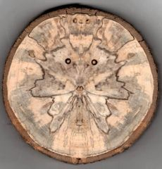 Spalted Spirits Ornament (1238)