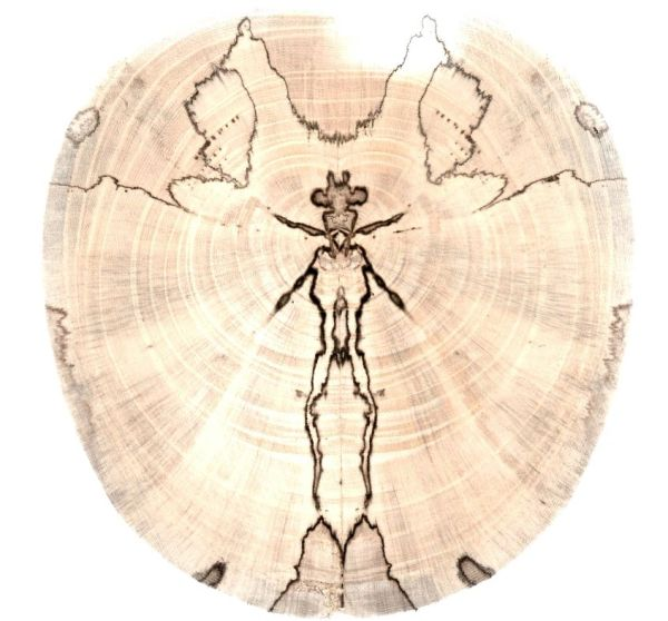 Spalted Treasures Ornament (1220)