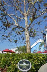 Brandon K Moon Tree Dedication