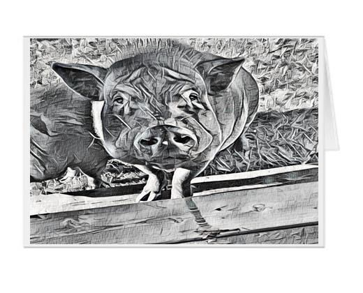 #F33| Around The Farm Greeting Cards | Oppie The Pot Belly Pig