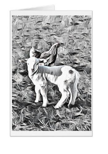 #F41| Around The Farm Greeting Cards | Baby Lamb With Hen | Ontario Canada