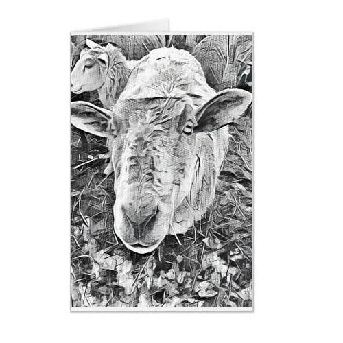 #F50| Around The Farm Greeting Cards | Sheep Face | Ontario Canada