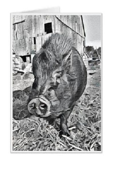 #F31| Around The Farm Greeting Cards | Bubba The Pot Belly Pig | Ontario Canada