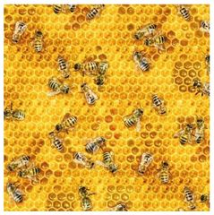 Fabric For Beeswax Wraps - 100 % Cotton | Honey Bees & Beehives