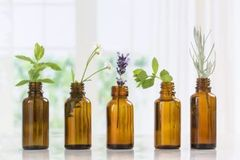 Essential Oils | 100% Pure Plant Oils - Therapeutic Grade G-M