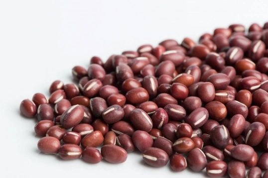 Adzuki Beans Sprout Seeds Organic Non GMO Kingston Ontario