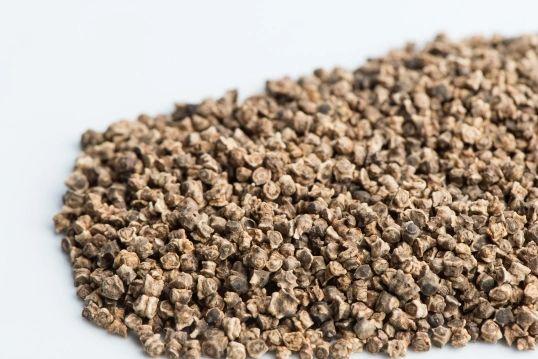 Beet Seeds Organic Non GMO Kingston Ontario - For Sprouting
