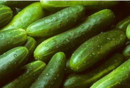 Cucumber Seeds Kingston Ontario - Straight Eight