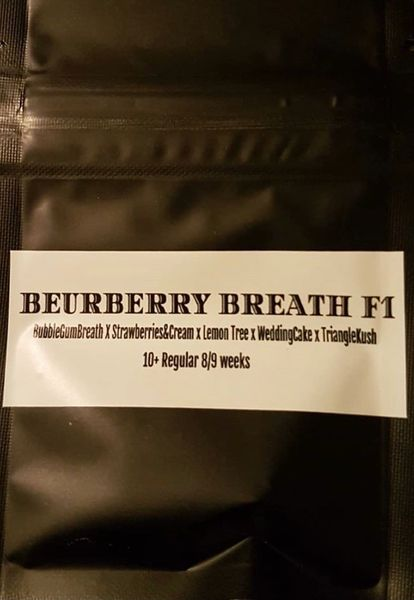 Beur berry breath F1