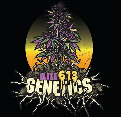 Elite 613 Genetics Seed Bank