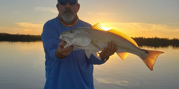 redfish caught inshore fishing new smyrna beach and mosquito lagoon areas