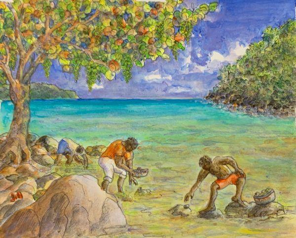 Tortola Whelk Pickers