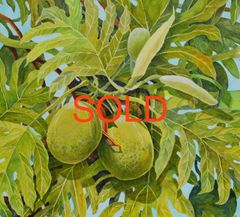 BREADFRUIT SOLD ***SOLD***