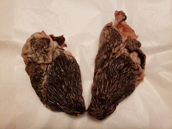 Pig Heart (half)