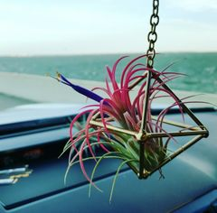 Geometric Air Plant Hanger - Road Trip Buddy - XS