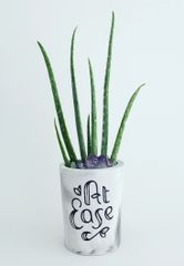 Cement Planter - At Ease