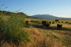 Holistic Planned Grazing Course