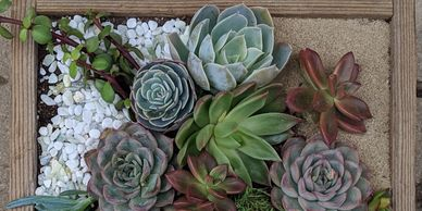 Developmental Disabillities Month Benefit 2019  Gardening  Non Profit  Community  Succulents