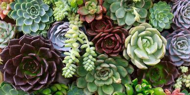 Lulac succulents  jardines community skill development mentor