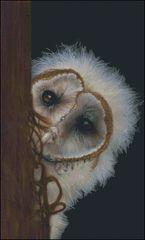 Fuzzy Wuzzy Owl