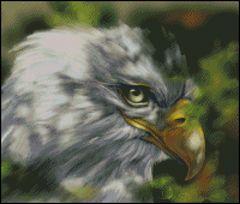 Eagle Profile
