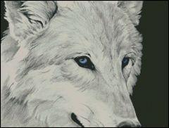 White Wolf - HS
