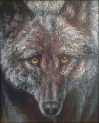 Windows to the Wild Wolf