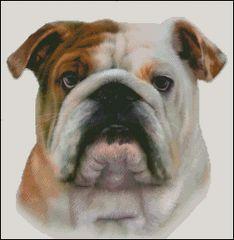 Bulldog NB