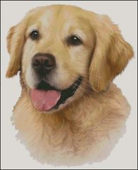 Golden Retriever NB