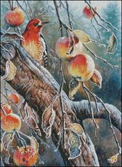 Woodpecker with Apples
