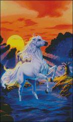 Stallion Sunset