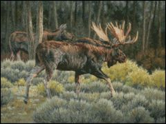 Moose Business
