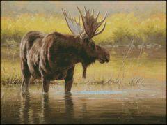 Pondering Moose