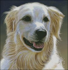 Golden Retriever - CC