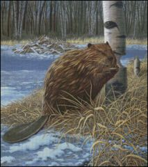 Leave it to a Beaver