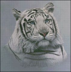 White Tiger - Blue Sapphires