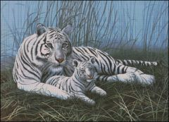 White Tigers in the Mist
