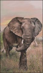 African Elephant - RS