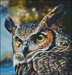 Great Horned Owl - Lachri