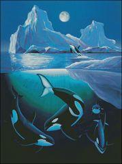 Arctic Orcas