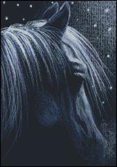 Still of the Night Horse