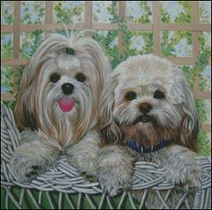 2 Lhasas on a Wicker Chair