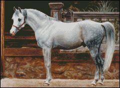 Standing Arabian