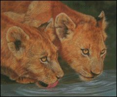 2 Lion Cubs Drinnking